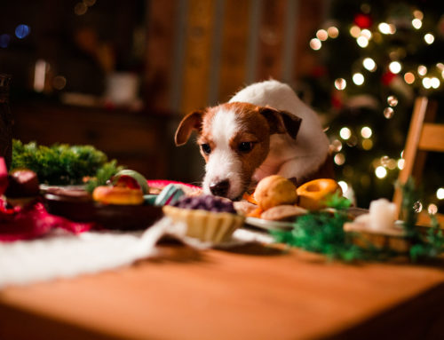 Keeping your pet safe through the holiday season