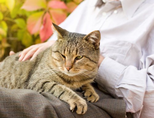 Why are pets good for your health?
