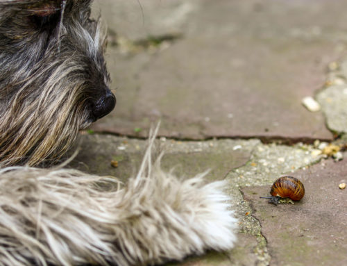 Lungworm – what is it and how to prevent it?